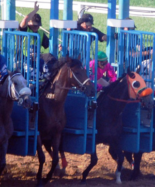 Horses leave the gate